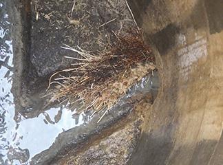 配管内を洗浄(樹木の根を除去)